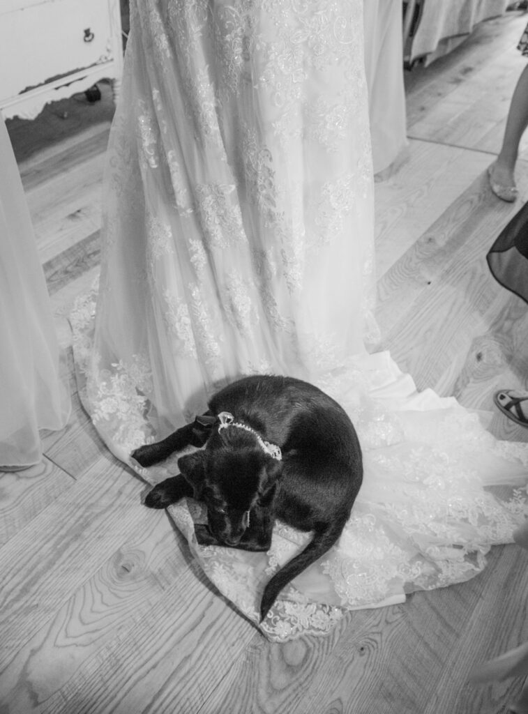 Puppy at Starry Night Barn and Studios Wedding